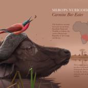 Carmine bee eater . Un proyecto de Ilustración de Alex Ivanov - 29.03.2020