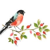 Garden Birds. Un progetto di Illustrazione di Laura McKendry - 24.06.2015
