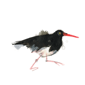 Coastal Birds. Un progetto di Illustrazione di Laura McKendry - 28.06.2014