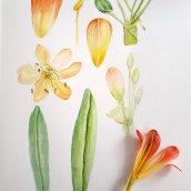 Mi Proyecto del curso: Ilustración botánica con acuarela: MI JARDÍN. Un proyecto de Ilustración botánica de rossanadeestrada - 09.09.2020