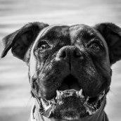 Mi Proyecto del curso: Introducción a la fotografía de perros. Un proyecto de Fotografía de salome_photo - 11.09.2020