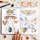 Insecta - estudo em aquarela (2019). Um projeto de Ilustração, Pintura, Pintura em aquarela e Ilustração com tinta de Franncine de Miranda (Estúdio Luares) - 17.06.2020