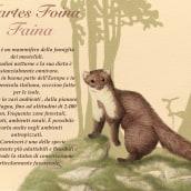 Martes Foina. A Illustration project by Valeria Carnevali - 10.25.2020
