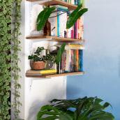 Tudo que você precisa saber sobre as melhores plantas para sua casa!. A Architecture, Interactive Design, L, scape Architecture, and Decoration project by Daniel Virgnio - 11.04.2020