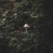 Detalles de la naturaleza. Um projeto de Fotografia e Fotografia em exteriores de Alvaro Valiente - 17.11.2020