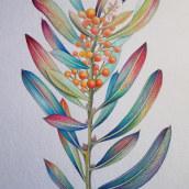Mi Proyecto del curso: Ilustración botánica con acuarela. Un proyecto de Ilustración e Ilustración botánica de ENRIQUE PARRA - 09.12.2020