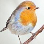 Mi Proyecto del curso: Ilustración naturalista de aves con acuarela. Un proyecto de Ilustración y Pintura a la acuarela de ENRIQUE PARRA - 12.12.2020