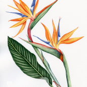 Mi Proyecto del curso: Acuarela botánica: ilustra la anatomía de las flores. A Botanische Illustration und Aquarellmalerei project by Trini hoolala - 24.01.2021