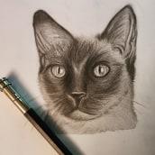 Siam Cat . Un projet de Illustration de Jazz - 12.04.2021