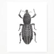 Ilustración Naturalista. Un projet de Illustration, Aquarelle et Illustration naturaliste de Javiera Videla - 26.11.2020