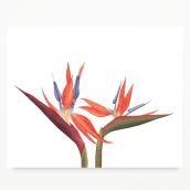Papelería Botánica. Un projet de Aquarelle, Illustration botanique et Illustration naturaliste de Javiera Videla - 05.01.2020