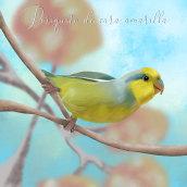 Aves peruanas en peligro de extincion. A Digital Painting project by Ariel Nine - 04.24.2021
