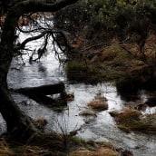 Landscapes 2. A Fotografie project by Debbie Castro - 27.04.2021