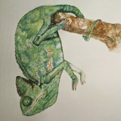 Chameleon studies . A Creativit, and Watercolor Painting project by Maddy Edgington - 04.18.2021
