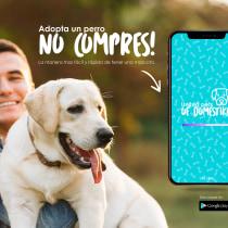 ¡Adopta no compres!. A Graphic Design project by Delid Martinez - 04.16.2019