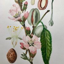 Ilustración botánica con acuarela. A Illustration project by Regina von Reitzenstein - 10.29.2019