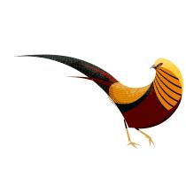 Faisão-dourado: trabalho de conclusão de curso. Un projet de Illustration vectorielle, Illustration numérique , et Dessin numérique de Fabio Rex - 18.04.2020