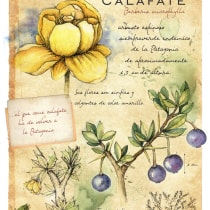 Mi Proyecto del curso: Ilustración de un diario naturalista de Patagonia. Un progetto di Illustrazione di Veronica Quercia - 04.06.2020