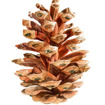Mi Proyecto del curso: Ilustración botánica con acuarela. A Botanische Illustration project by Maribi Benito Martin - 21.08.2020
