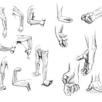 Recopilación de anatomía humana Jacobo. A Illustration project by Jacobo Ospina Rojas - 17.09.2020