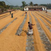 Mi Proyecto del curso: Trabajadores del Arroz. Un proyecto de Fotografía documental de Celia - 05.11.2020