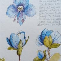 Mi Proyecto del curso: Cuaderno botánico en acuarela. Un progetto di Illustrazione botanica di Marce - 17.11.2020