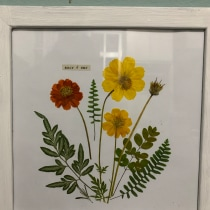 Meu projeto do curso: Técnicas básicas para prensar flores e plantas. A H und werk project by Thaís Santiago - 23.12.2020