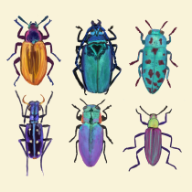 My project in Scientific Illustration for Pattern Design course. A Illustration, Musterdesign, Digitale Illustration und Naturgetreue Illustration project by Aneta Urbanik - 15.07.2021