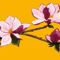 Meu projeto do curso: Ilustração botânica com aquarela. A Illustration, Fine Art, Painting, Drawing, Watercolor Painting, and Botanical illustration project by daniifreier - 06.25.2021