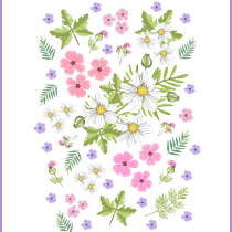 My project in Floral Illustration and Pattern Design course. A Illustration, Painting, Pattern Design, Drawing, and Botanical illustration project by Edita Brus - 07.26.2021