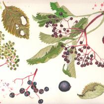 My project in Botanical Illustration with Watercolors course. A Illustration, Bildende Künste, Malerei, Zeichnung, Aquarellmalerei und Botanische Illustration project by Lubica Balunova - 20.08.2021