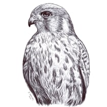 Mi Proyecto del curso: Ilustración naturalista con bolígrafo. A Illustration, Drawing, Realistic drawing, and Naturalist Illustration project by aleho - 08.21.2021