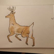 My project in Animal Illustration: Capturing Wildlife in a Sketchbook course. A Illustration, Collage, Sketchbook, and Naturalist Illustration project by Samantha de Mattos - 08.28.2021