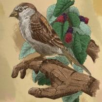 Mi Proyecto del curso: Ilustración naturalista con bolígrafo. A Illustration, Drawing, Realistic drawing, and Naturalist Illustration project by Miguel - 09.04.2021