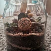 My first terrarium  . Un projet de Design d'intérieur, Pa, sagisme, Décoration d'intérieur, DIY , et Art floral et végétal de adriana.cocic - 11.09.2021