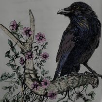 My project in Naturalist Illustration with Ballpoint Pen  course. A Illustration, Drawing, Realistic drawing, and Naturalist Illustration project by Sue Higgerson - 09.13.2021