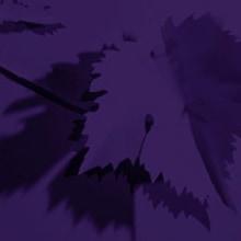 Marca para Vinnia. Um projeto de Design e Ilustração de Estudio Menta - 25.03.2010