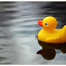 Patos por el mundo. Un projet de Design , Illustration , et Photographie de Erika Aguilar - 19.12.2011