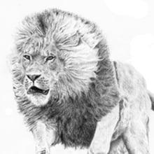 Animales de tinta y lapiz. Un proyecto de Ilustración de Jose Martínez Calderón - 03.07.2012