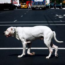 NY NY. Un proyecto de Instalaciones y Fotografía de Roser Diaz - 11.11.2012
