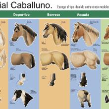 Caballos-Infografía rasgos de. Um projeto de Design e Ilustração de Isabel Martín - 26.09.2013