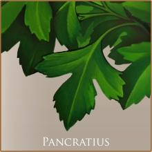 Pancratius. Un projet de Illustration de Pepetto - 18.01.2014