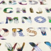 Feather Type. Un progetto di Graphic Design , e Tipografia di Manuel Persa - 18.09.2013