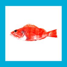 Fishop UI + Branding. A Softwareentwicklung, UI / UX, Br und ing und Identität project by walrus. - 06.05.2014