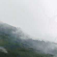 Natura. Un progetto di Illustrazione, Belle arti , e Pittura di Jaime Sanjuan Ocabo - 28.08.2014