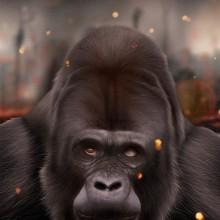 Gorila. Un progetto di Illustrazione, Belle arti , e Pittura di Jaime Sanjuan Ocabo - 15.03.2015