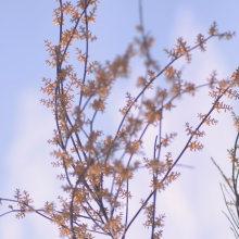 Branches. Um projeto de Fotografia de Patricia Suárez - 02.04.2015