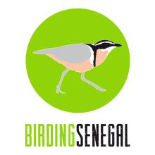 Identidad Corporativa Birding Senegal. Um projeto de Design gráfico e Web design de Sara Palacino Suelves - 23.08.2015