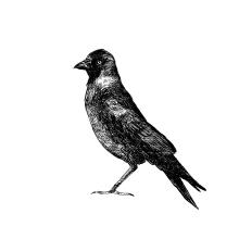 Birds. Un proyecto de Ilustración de alexis aldeguer - 03.01.2016