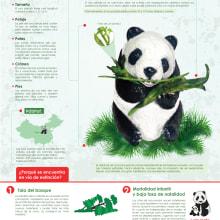 El oso panda o panda gigante. A Graphic Design project by Lizeth Nohelia Avendaño - 02.04.2016